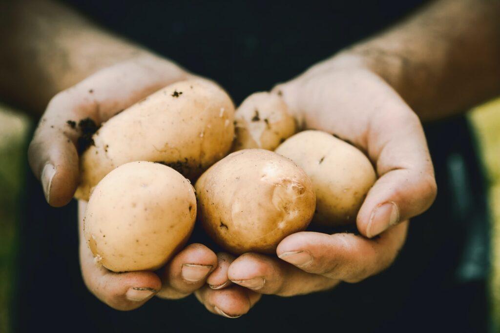 Kartofler på bål